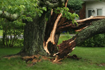 Debris Removal in Maryland